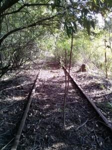 tren 4